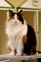 Patches - Adopted!